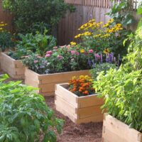 raised garden bed shelby nc